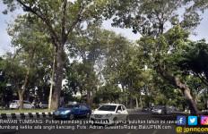 Berbahaya! Sejak Awal Tahun, Ada 322 Pohon Tua Tumbang - JPNN.com