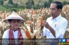 Presiden Jokowi Senang Impor Jagung Menurun Drastis - JPNN.com