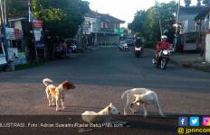 Setop Jual Beli Daging Anjing, Akademisi Sarankan Koster Bikin Pergub - JPNN.com