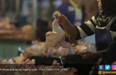 Harga Ayam di Madiun Cuma Rp6 Ribu per Kg, Tangsel Rp25 Ribu - JPNN.com