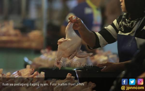 Stok Daging Ayam Aman Hingga Idulfitri - JPNN.com