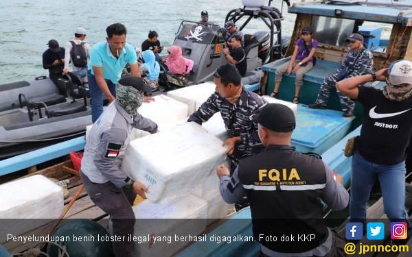 KKP Gagalkan Penyelundupan Benih Lobster Senilai Rp30,8 miliar di Jambi - JPNN.com
