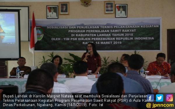 Program Peremajaan Sawit Rakyat Harus Digarap Serius - JPNN.com
