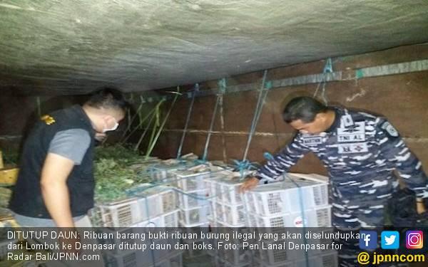 TNI AL Gagalkan Penyelundupan 1.500 Ekor Burung Kicau Asal Lombok - JPNN.com