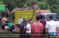 Delapan Gajah Lahat Diungsikan ke Banyuasin - JPNN.com
