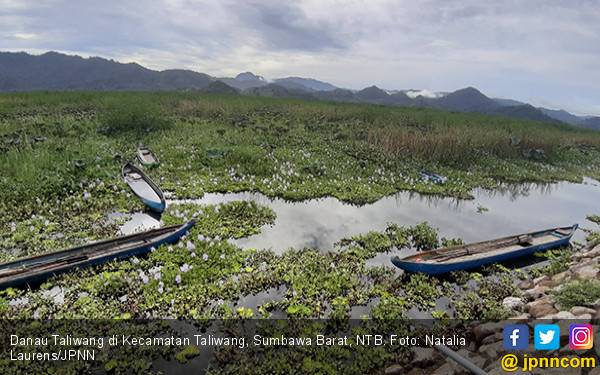 Manjakan Mata di Hamparan Teratai Danau Taliwang - JPNN.com