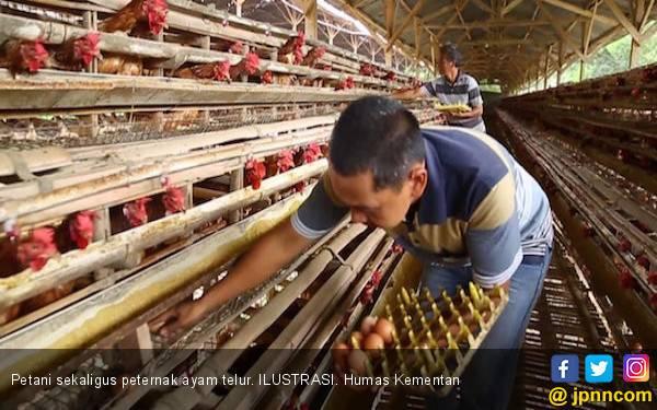 Harga Ayam Anjlok, Pemerintah Gandeng 3 Asosiasi - JPNN.com