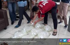 KKP Gagalkan Penyelundupan Kepiting Bertelur di Medan dan Balikpapan - JPNN.com