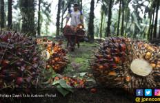 Kemitraan Petani dengan Pengusaha Perkuat Daya Saing Industri Sawit - JPNN.com