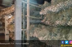 Peringatan Tegas Pemerintah untuk Importir Bawang Putih - JPNN.com