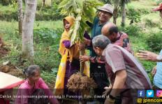 Porang Kultur Jaringan - JPNN.com