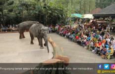 Ngabuburit Bersama Gajah, Unta dan Kuda Poni - JPNN.com