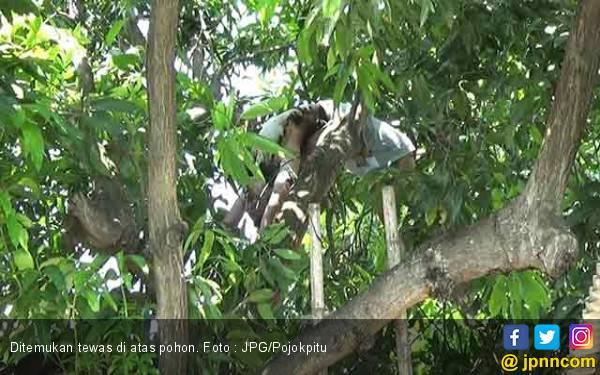 Jenazah Ditemukan di Atas Pohon, Ternyata.. - JPNN.com