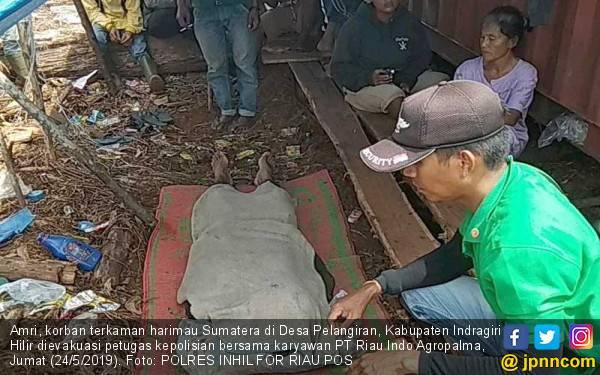 BBKSDA Pastikan tidak Evakuasi Harimau yang Tewaskan Warga - JPNN.com