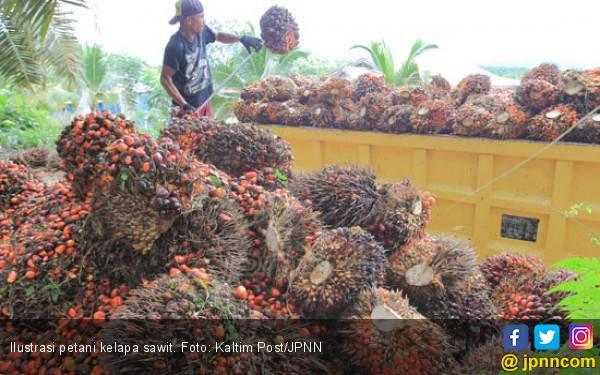 Afrika Tertarik Kembangkan CPO dari Indonesia - JPNN.com