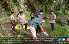 Tengkorak Manusia Ditemukan Berserakan di Perkebunan Sawit - JPNN.com