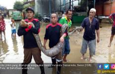 Buaya, Ular Piton, Kobra, Bermunculan di Tengah Banjir Samarinda - JPNN.com