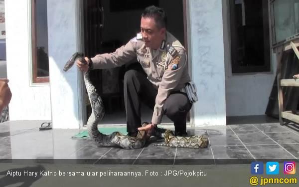 Tak Bekuk Penjahat, Aiptu Hary Lebih Sering Diminta Tangkap Ular - JPNN.com