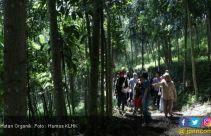 Silvikultur Intensif Hutan Alam Menuju 100 Tahun Kemerdekaan Indonesia - JPNN.com