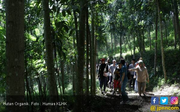 Dekat Jakarta, Ada Hutan Organik, Bukti Aksi Konkret Pengendalian Perubahan Iklim - JPNN.com