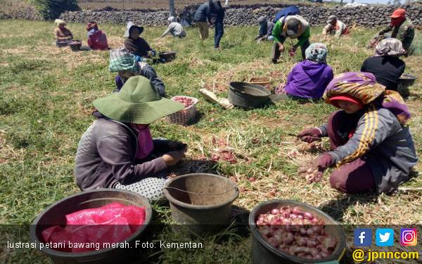 Bawang Merah Provitas 30 Ton Asal Bantaeng Siap Didaftarkan - JPNN.com