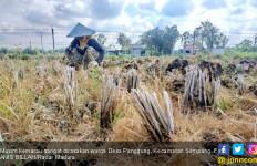 64 Desa di Sampang Berpotensi Terdampak Kekeringan - JPNN.com
