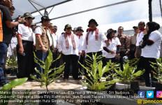 Macadamia, Tanaman Rehabilitasi Hutan Penuh Manfaat - JPNN.com