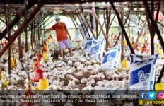 Harga Jual Anjlok, Peternak Ayam di Banten Gulung Tikar - JPNN.com