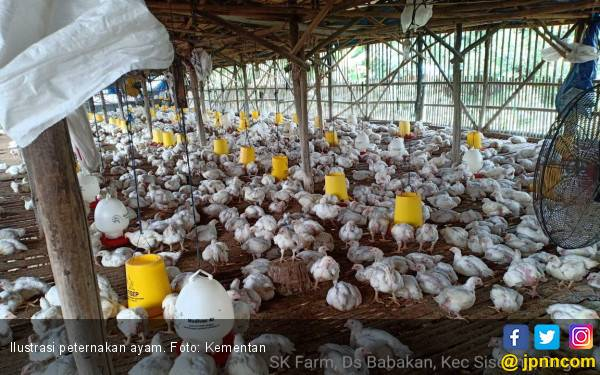 Kementan Dorong Bantuan Ayam Bekerja Pada Rakyat Miskin di Nganjuk - JPNN.com