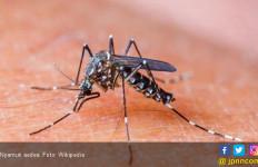 Ratusan Warga Pamijahan Bogor Terserang Chikungunya - JPNN.com