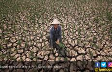 Kekeringan, Ribuan Hektare Sawah di Batanghari Terancam Gagal Panen - JPNN.com