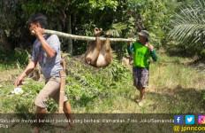 20 Anjing Dikerahkan untuk Memburu Monyet Nakal, Beginilah Akhirnya - JPNN.com