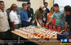 KLHK Gagalkan Penyelundupan Paruh Burung Rangkong Gading ke Hongkong - JPNN.com