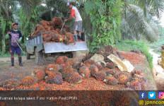 Makin Diserang, Industri Kelapa Sawit Indonesia Justru Kian Show Off - JPNN.com