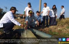 Cara Jitu Kementan Selamatkan Sawah Kekeringan di Indramayu - JPNN.com