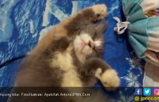 Pemakan Kucing Hidup Sudah Teridentifikasi, Ini Nama dan Motifnya - JPNN.com