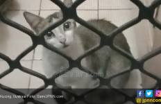 Netizen Kecam Pria Pemakan Kucing Hidup - JPNN.com