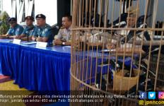 Lanal Batam Gagalkan Penyeludupan Burung Kacer - JPNN.com