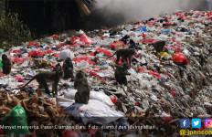 Ratusan Monyet Serbu Pasar Ciampea Baru Bogor - JPNN.com