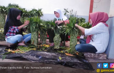 Ekspor Bambu Hoki bikin Petani Untung - JPNN.com
