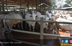 Martin Manurung Salurkan 10 Sapi Kurban di Danau Toba - JPNN.com
