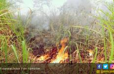 335 Hektare Hutan Terbakar, Satu Orang Meninggal Dunia - JPNN.com