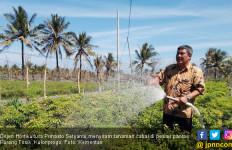 Bertanam Cabai di Lahan Berpasir, Karunia Tuhan Tiada Henti - JPNN.com