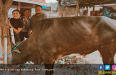 Awkarin Nyaris Diseruduk Sapi Kurban - JPNN.com