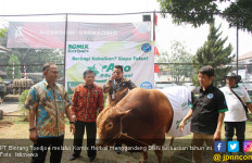 Komix Herbal Gandeng BNN Berkurban di Iduladha - JPNN.com