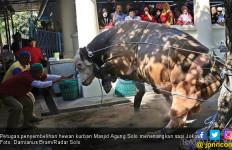 Detik-Detik Sapi Jokowi di Solo Disembelih, Susah Banget, Lihat Videonya - JPNN.com