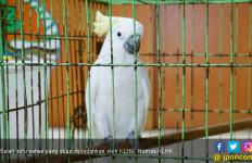 KLHK Segera Pindahkan 74 Satwa Liar Dilindungi - JPNN.com