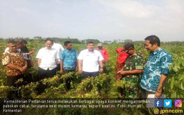 Siasat Ditjen Hortikultura Kementan Pacu Pengembangan Varietas Cabai Unggul - JPNN.com