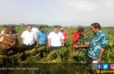 Siasati Musim Kemarau, Ditjen Hortikultura Pacu Pengembangan Varietas Cabai Unggul - JPNN.com