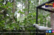 Bea Cukai Sorong Ikut Jaga Kelestarian Burung Endemik Papua - JPNN.com